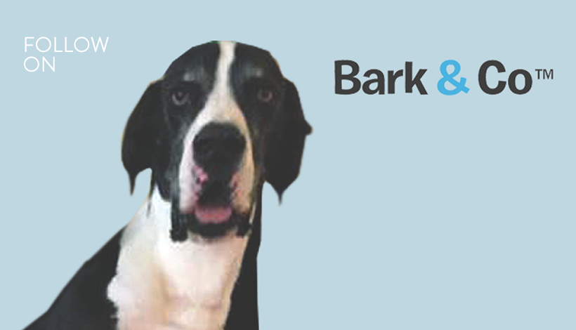 """<a href=""""/area-of-your-site""""></a> Matt Meeker, Founder & CEO <br><br>Branded Canine Commerce</a>"""