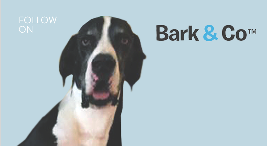 """<a href=""""/area-of-your-site""""></a> Matt Meeker, Founder & CEO<br>Branded Canine Commerce"""