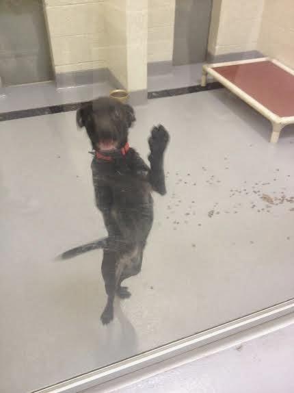 doggies-on-the-catwalk-humane-society-fashionado