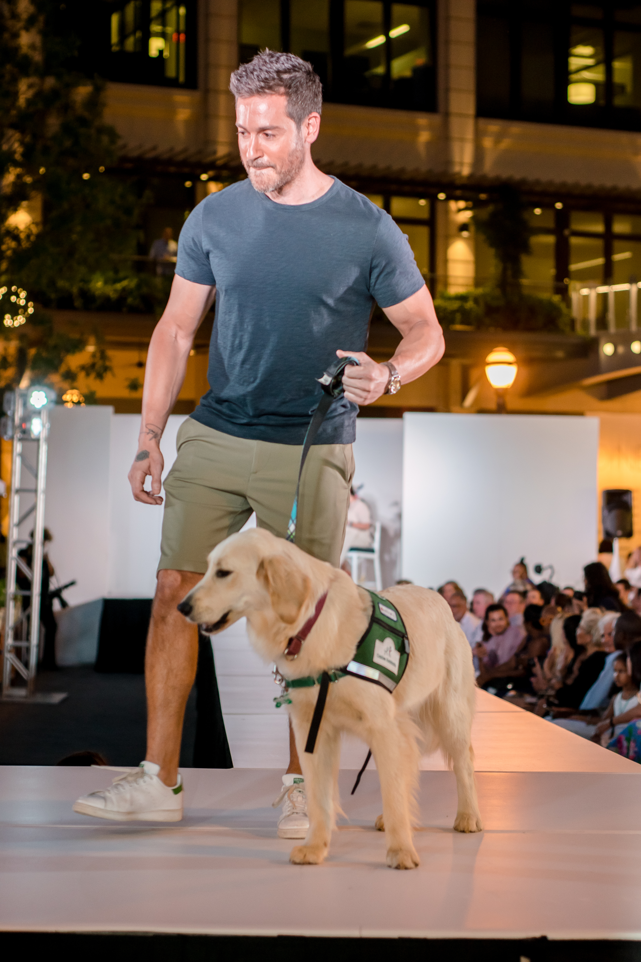 Doggies on the Catwalk