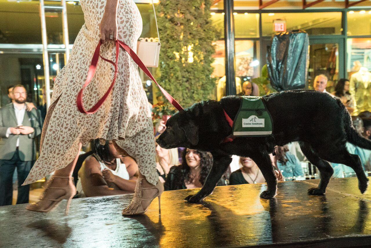 Doggies on the Catwalk 2017
