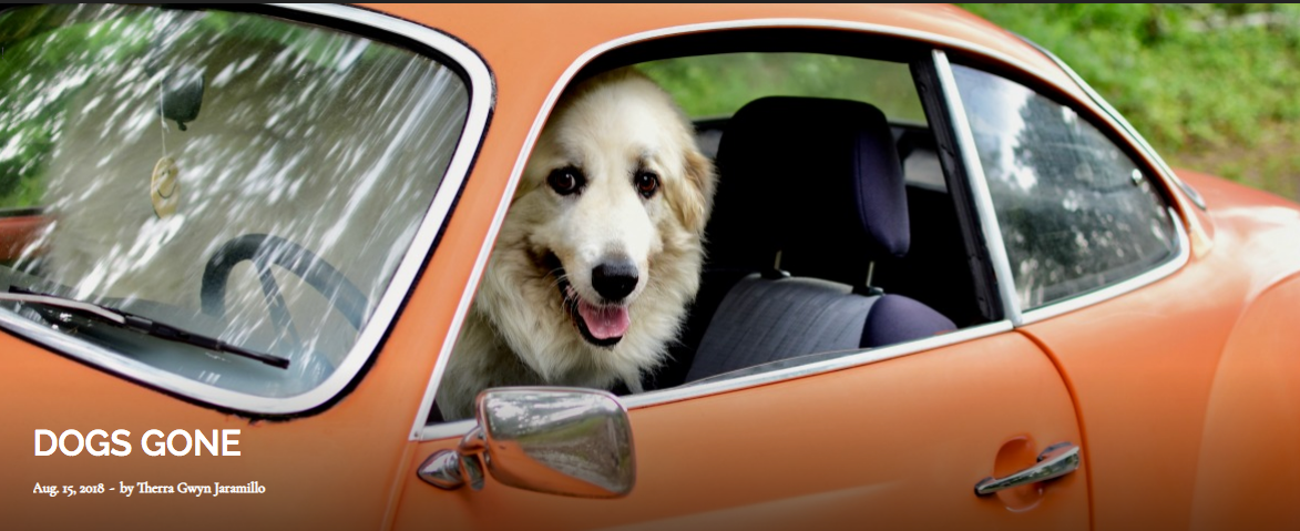 Ponyboy, a Great Pyrenees from Lithonia, is ready to hit the road from the driver's seat of his retro Karmann Ghia. His favorite vacation destination: the beach, always the beach. Photo by Wendy Palmer.