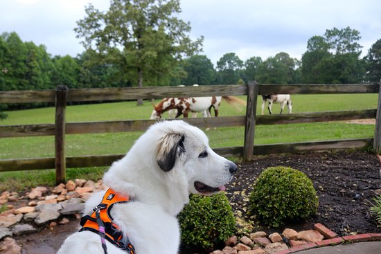 At Barking Fox Farm in the foothills of the Blue Ridge Mountains, your pooch can rub noses with the horsey set. Photo: TripAdvisor