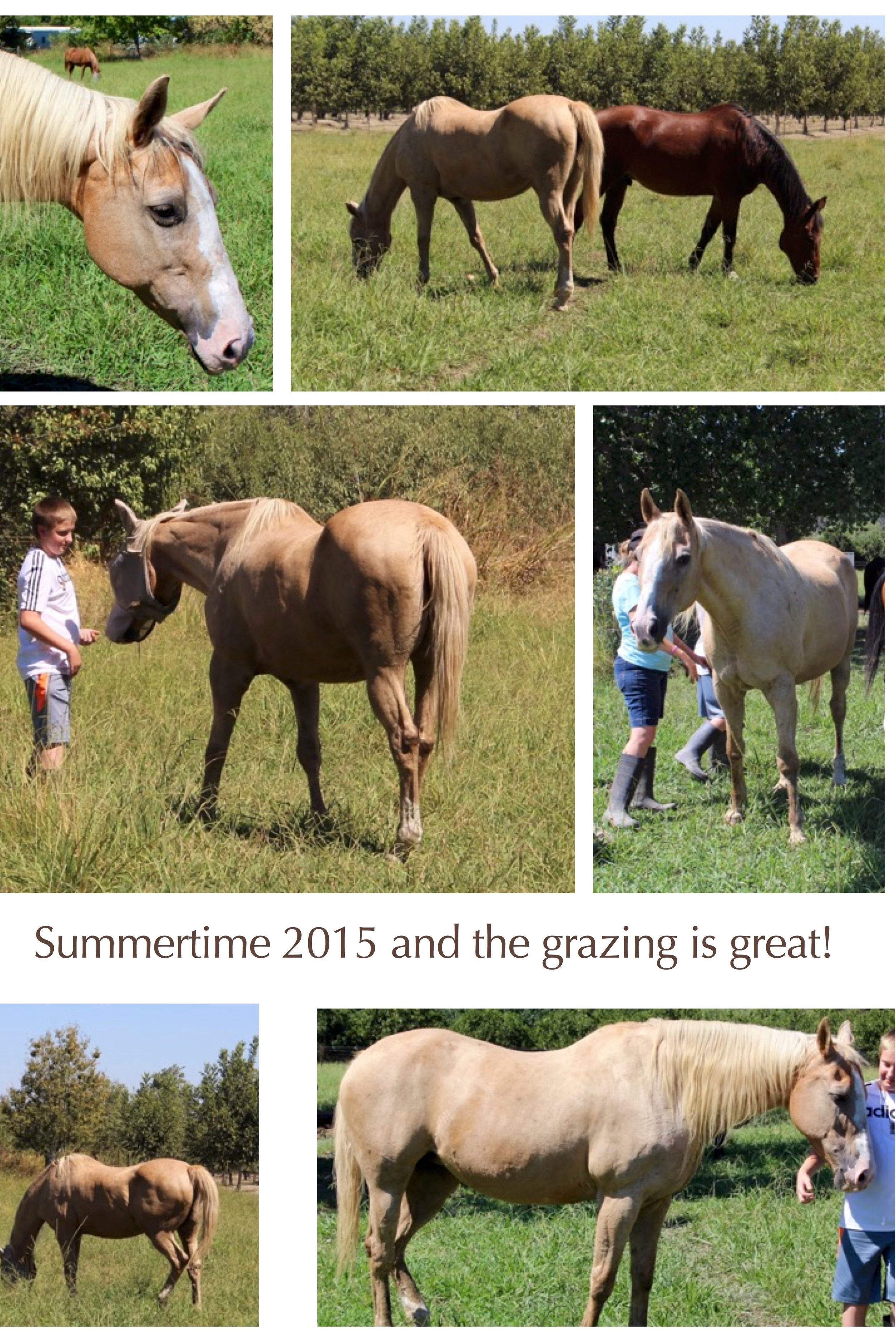 Summer time & the Grazing is Good! (3).jpg