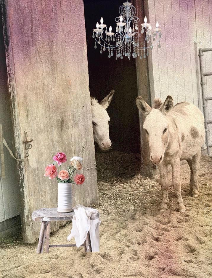 An adorable & very creative pic of our two little miniature donkeys, Calvin and Hobbes. They make me smile  :) Many thanks Kathryn K for sharing this with us!