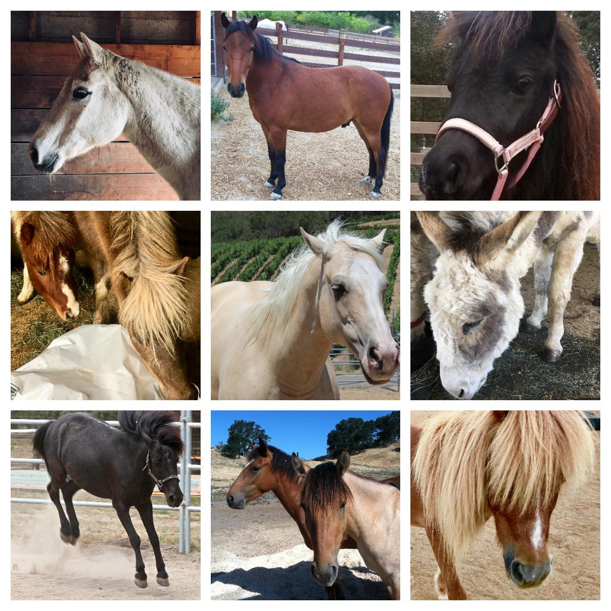 BHR Horses #1.jpg