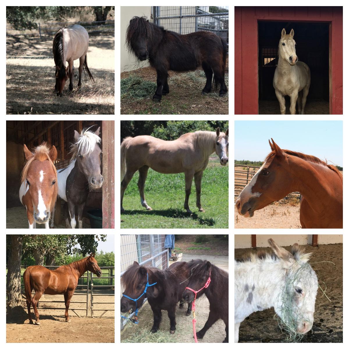 BHR Horses #2.jpg