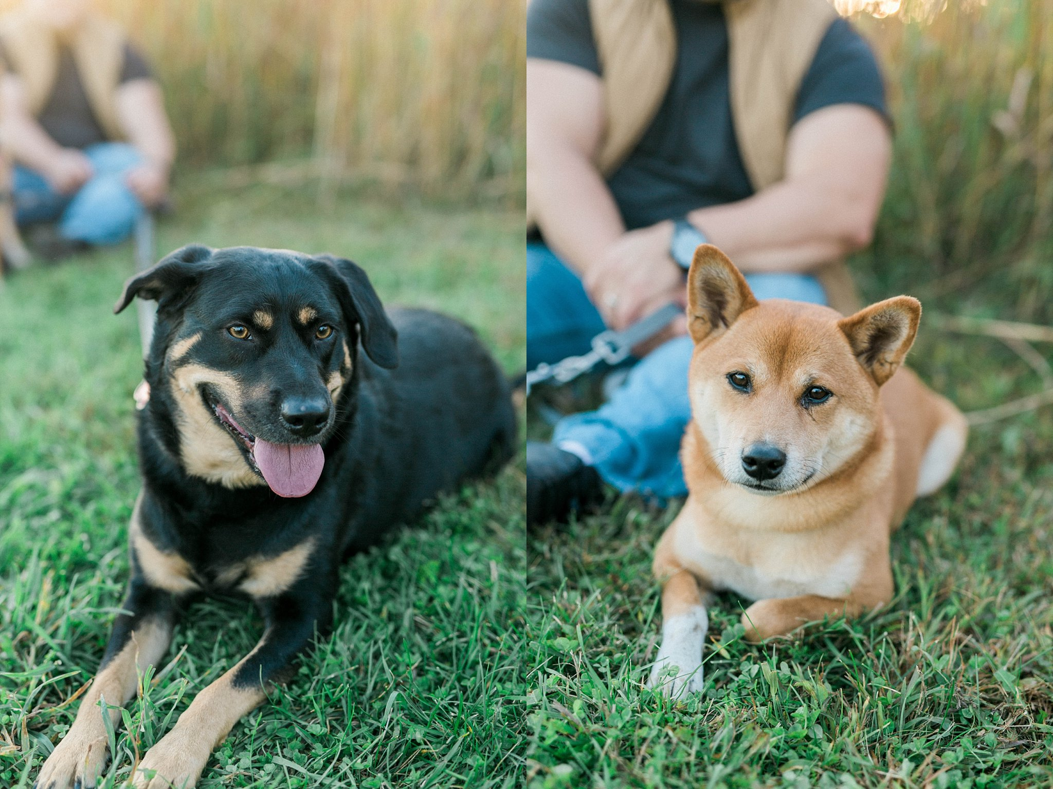 quad cities pet photography