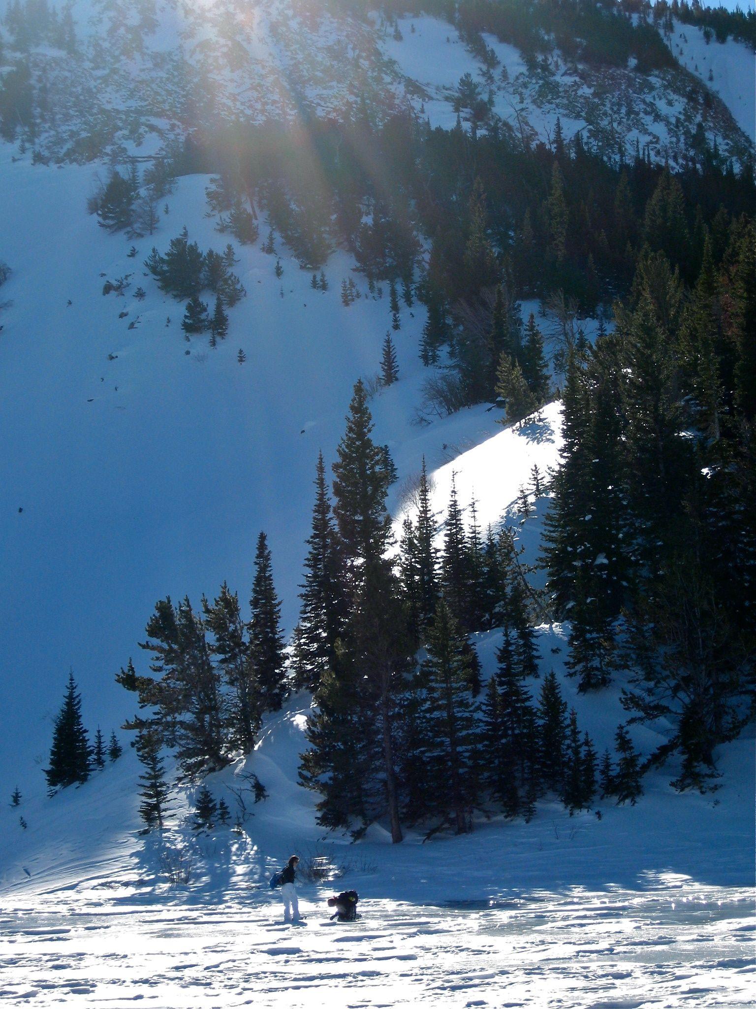 snowy tree.jpg