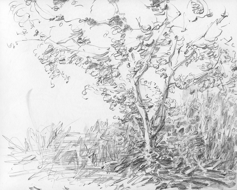 Field, tree, brush