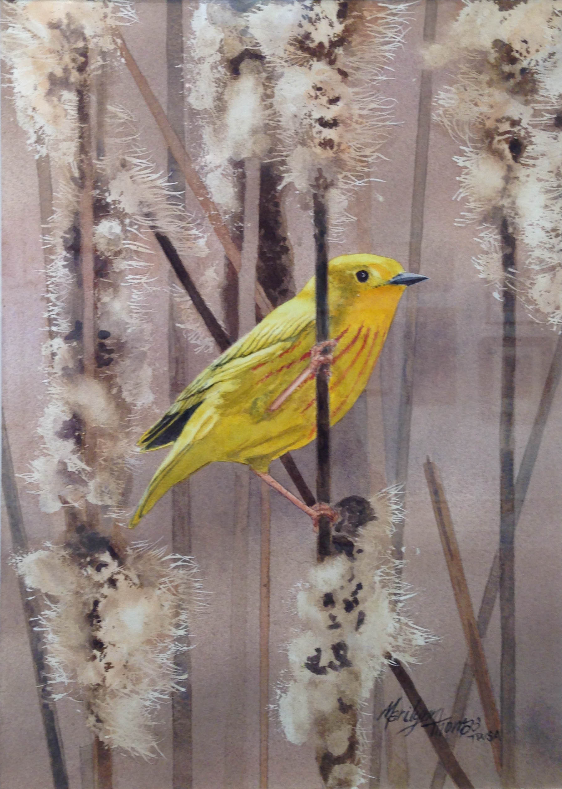 """Marilyn Thomas, """"Yellow in Cattails"""""""
