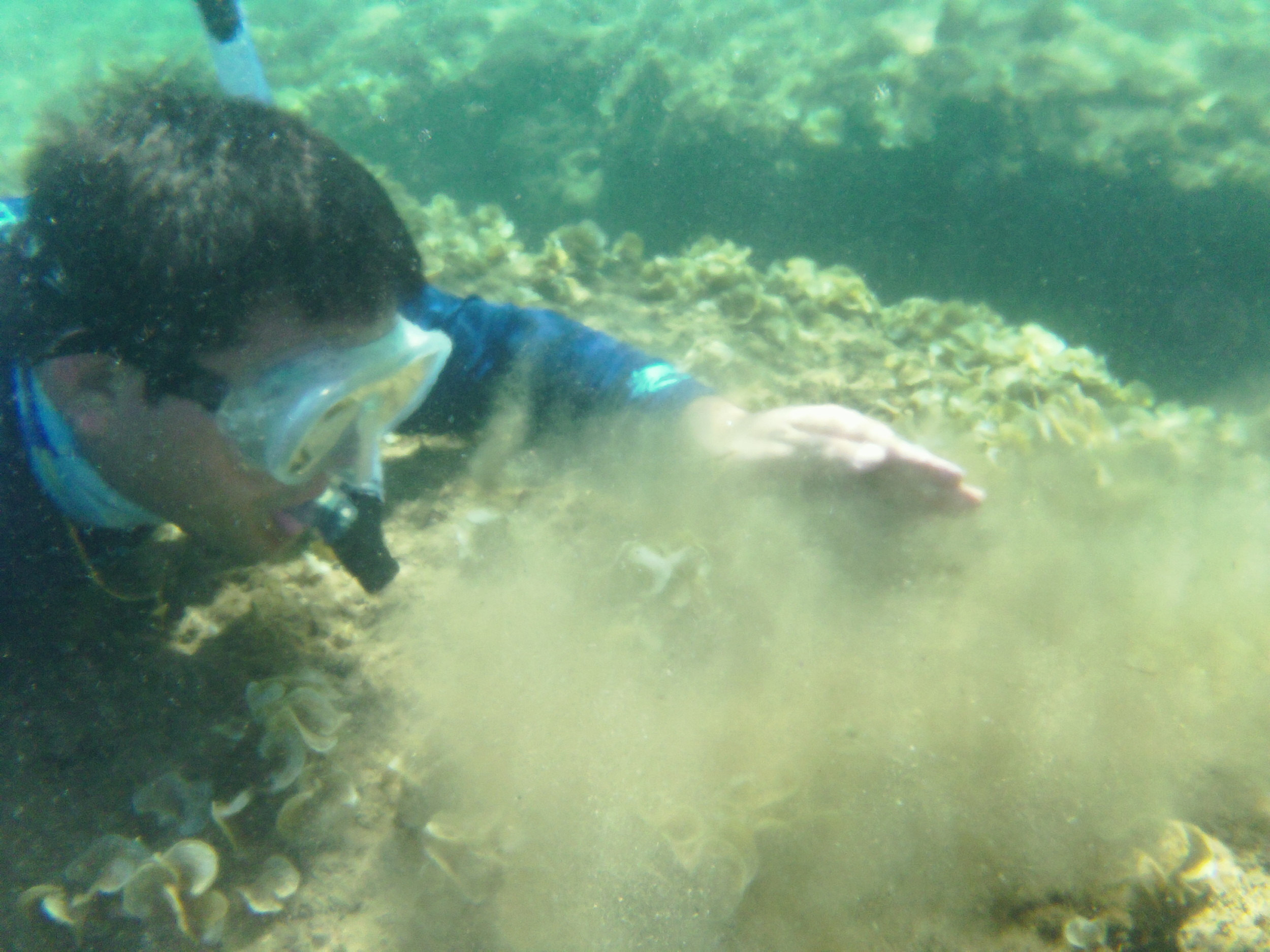 Sediment is layered on coral reefs in Fouha Bay.