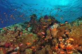 "Peter Pinkerton,  Coral   Garden              Photography on canvas, 26""x 38""  Price $300"