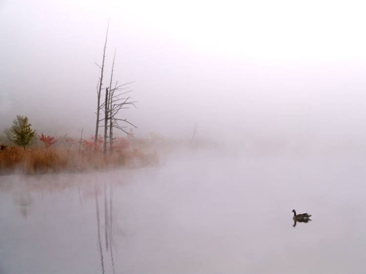 John Bailey,  Pond Mist   Photography  Price $250.00