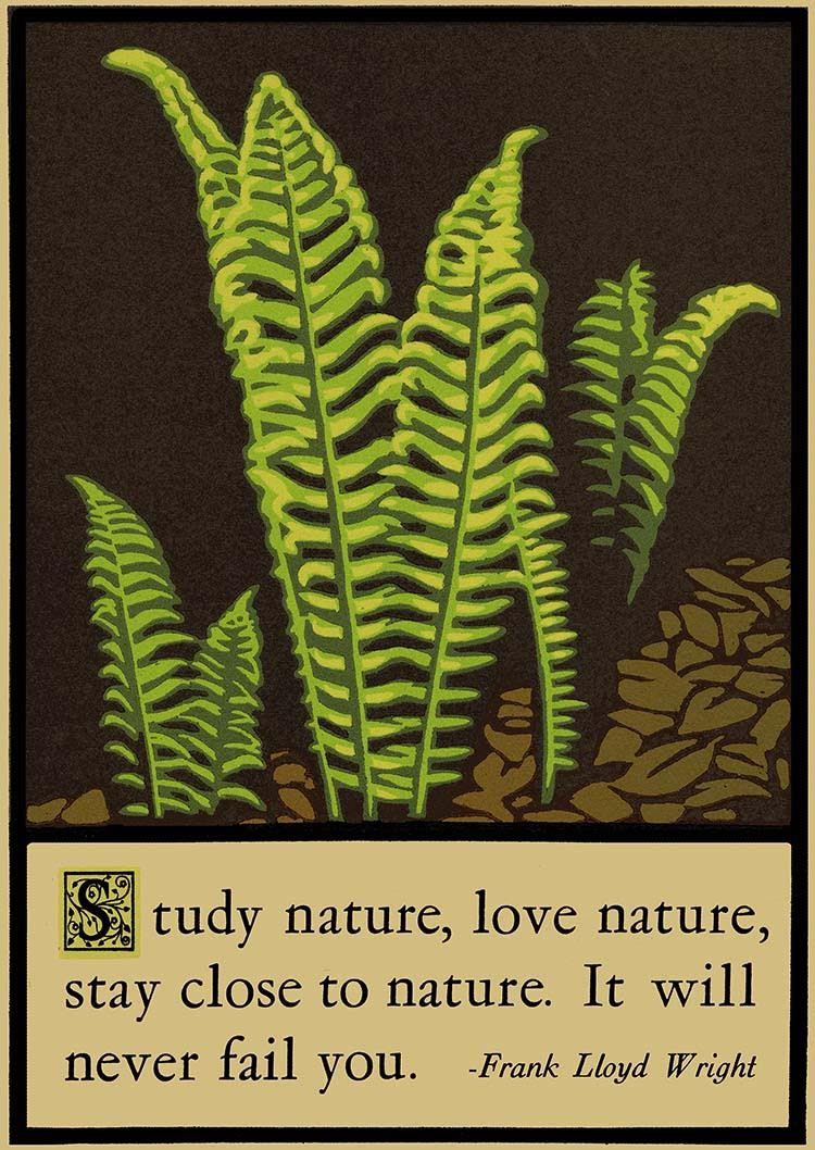 "Laura Wilder, ""Ferns"" signed limited edition Block print $295. Sold (more prints are available)"