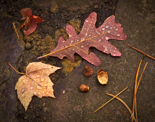 "John Bailey, ""Fallen Leaves""                                        Digital Photography, $240"