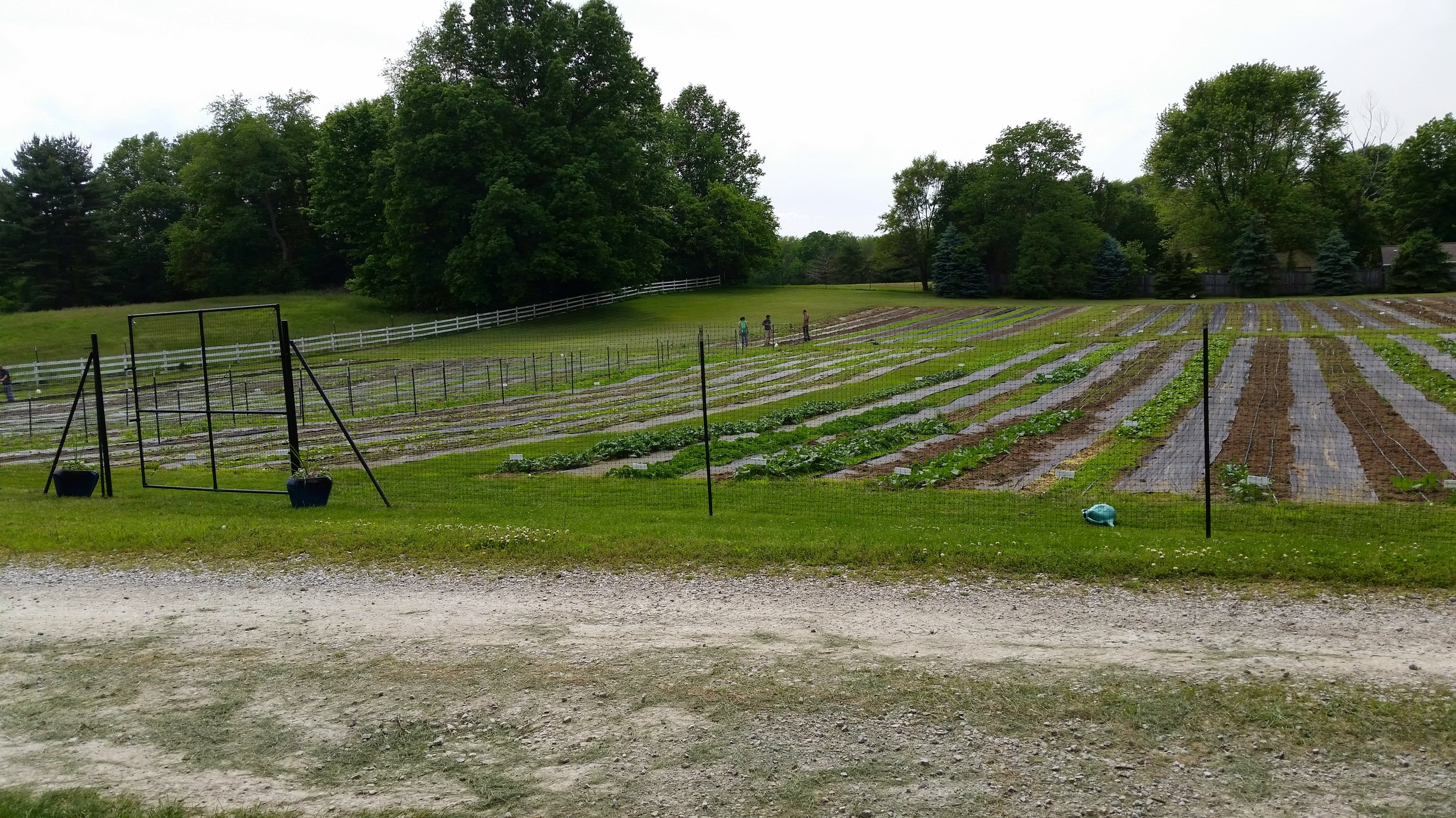 Welcome to the Pickery! Terre Haute's own certified organic vegetable farm. Pick your own or select items from our farm stand.