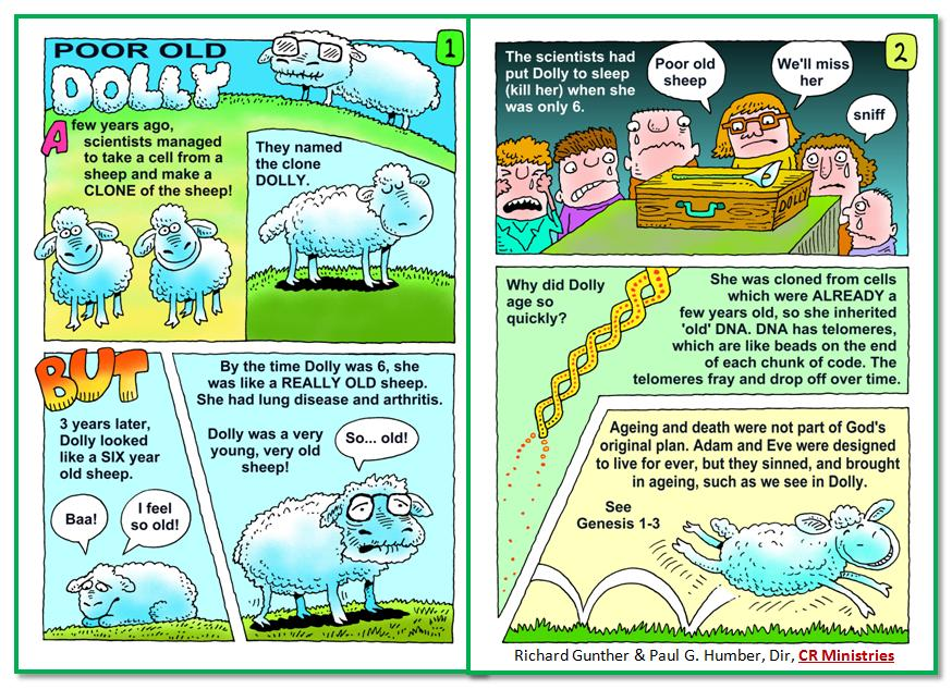 Sheep normally live 10-12 years, so Dolly's life was shortened considerably. Before the global flood, humans lived much longer, but something happened to shorten man's life. Some think maybe there had been a vapor canopy in place that protected man from solar radiation and also evenly distributed temperatures on earth. Perhaps meteors pierced through that canopy at the time of the Lord's water judgment, resulting in major precipitation. We know, for example, that there was once lush life in what is today the Sahara Desert. The theorized canopy, if depleted, could account for animals at the poles freezing, the vapor canopy no longer providing evenly distributed temperatures on the planet. Think of frozen mammoths and the Ice Age. The Bible tells about a global flood and also warns about a coming global fire (cf. 2 Peter 3). Is there an ark for us today? Yes, the FOUNTAIN OF LIVING WATERS (aka Creator Christ, Jehovah Jesus, and King of the Universe). Humble your heart before Him in faith before it is too late.