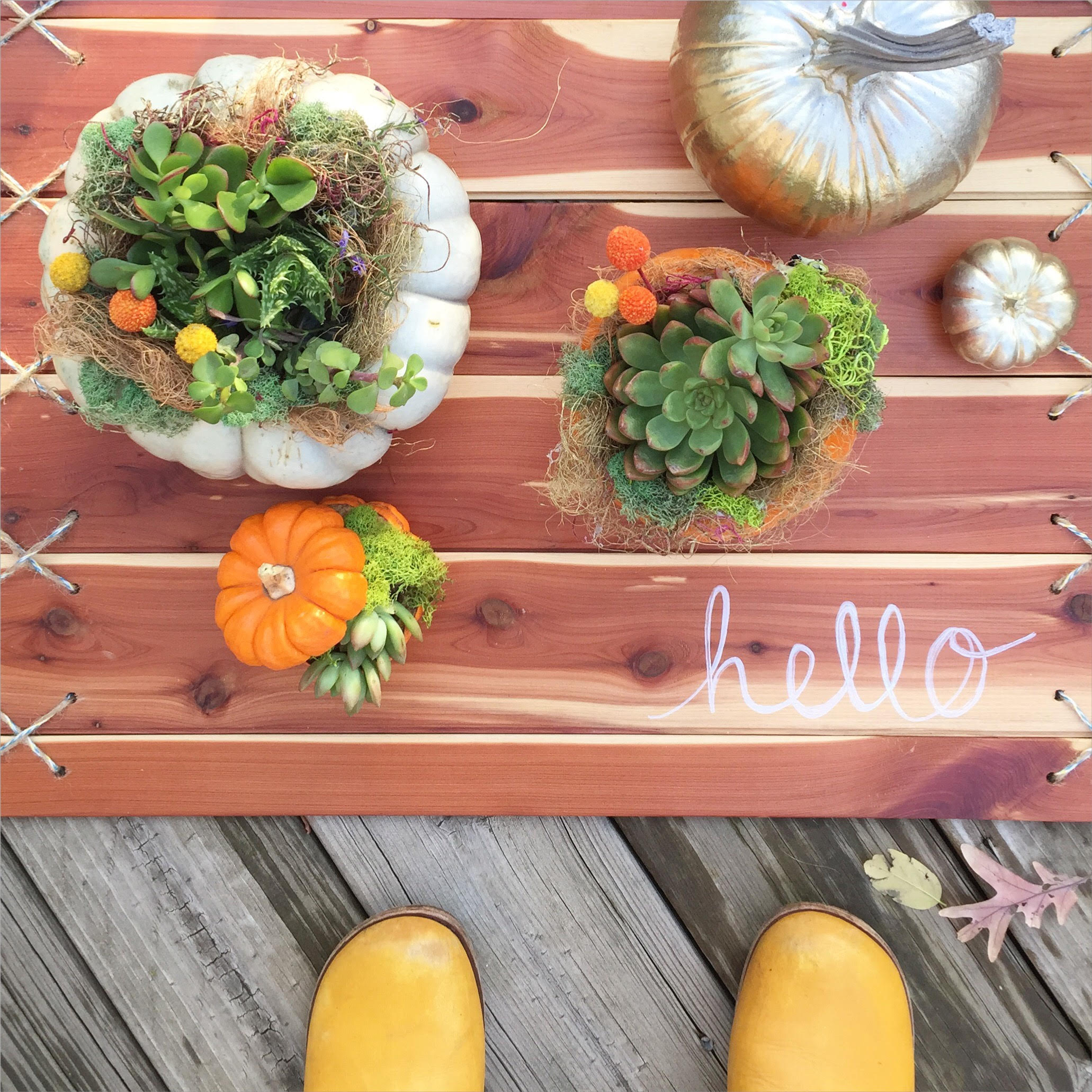 Succulent Arrangements on my DIY Cedar Plank Rug.