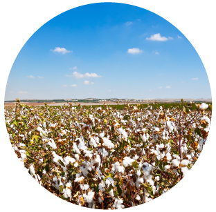 Spray Irrigation - Cotton   Incorporate weather and soil data into real time irrigation to ensure water is only applied when required.