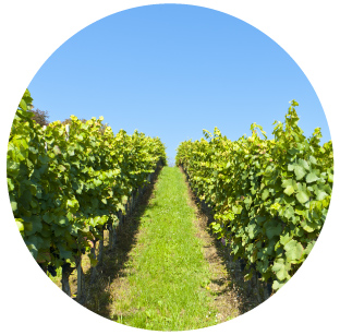 Micro Irrigation - Viticulture   Make informed, timely decisions based on accurate and reliable data by controlling irrigation, fertigation, frost control and heat stress.