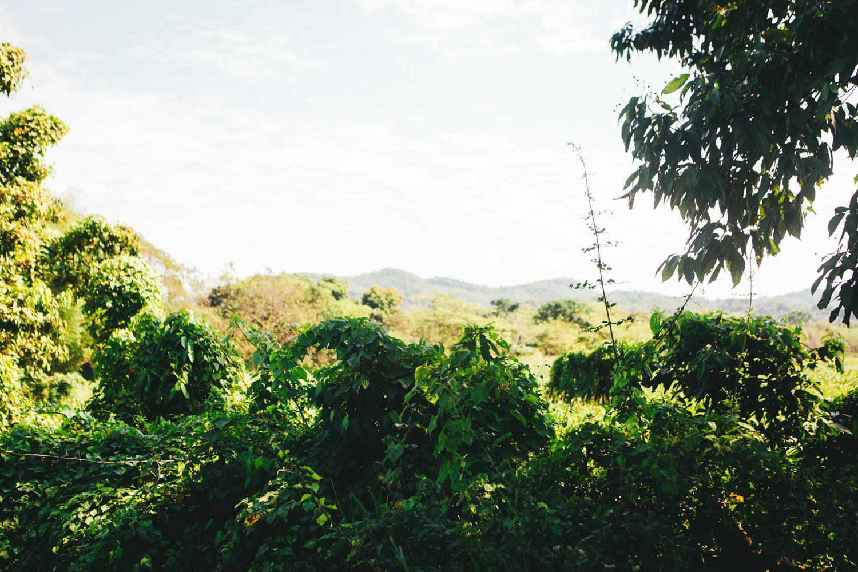 Jamaica-71.jpg