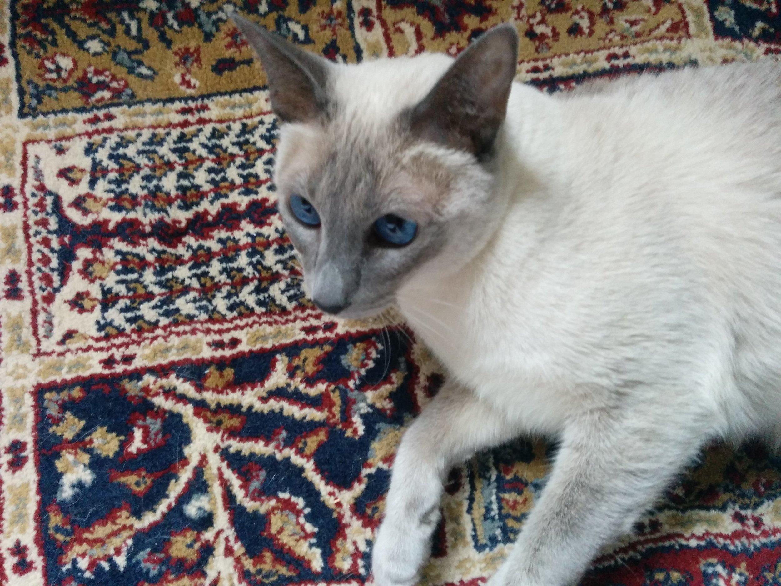 lily rug.jpg