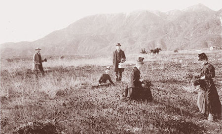The poppy fields of Altadena, This photo, taken around 1875 to 1880, looks northwest across Altadena toward Millard Canyon. Chiquita Canyon is nearby.