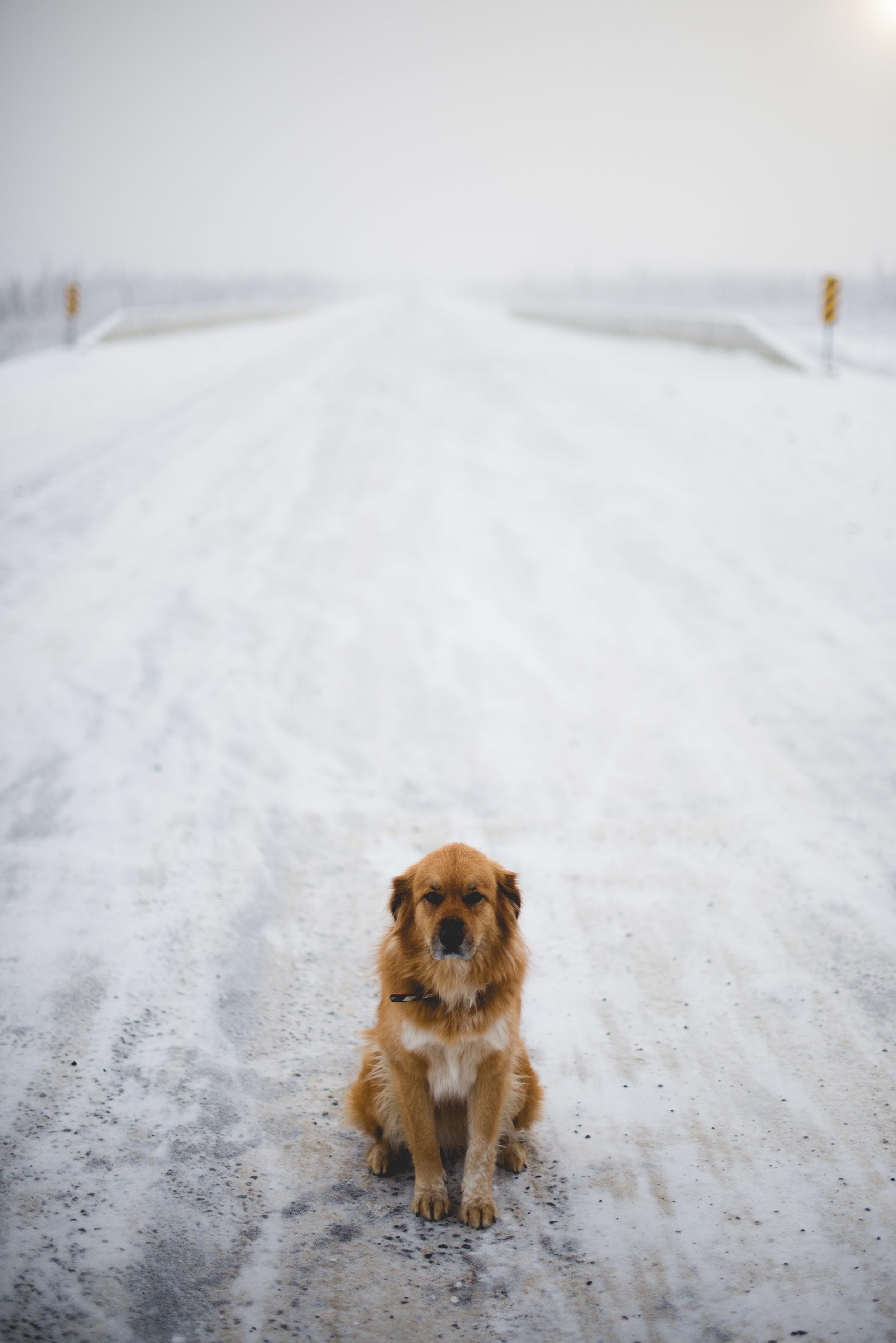 Alaska-41.jpg