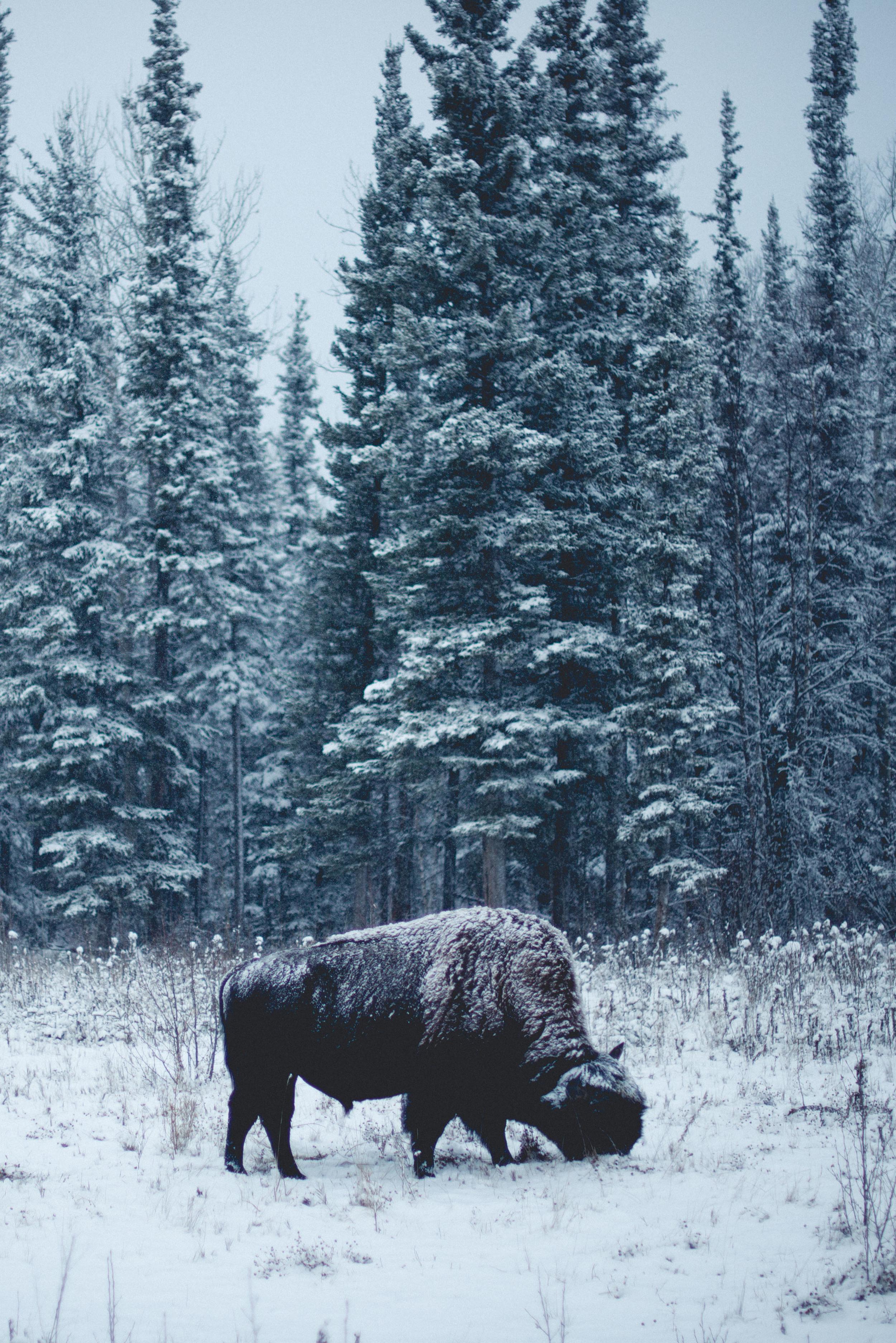 Alaska-14.jpg
