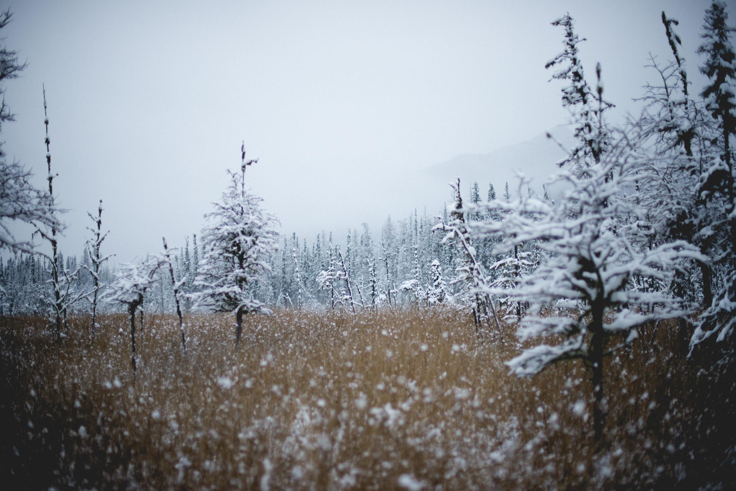 Alaska-17.jpg
