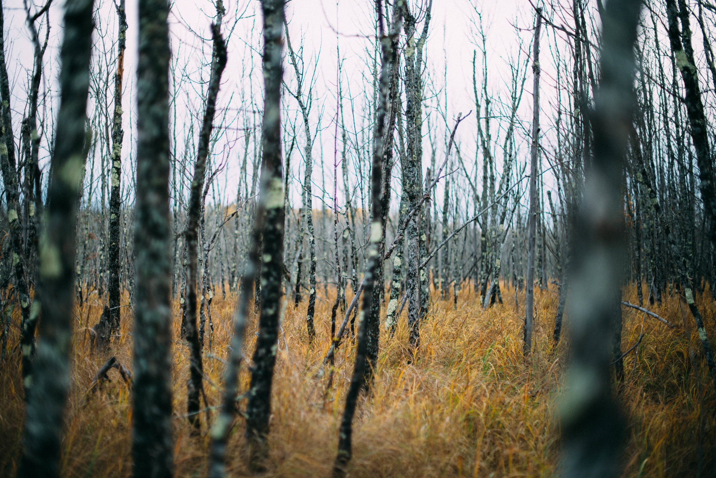 the_woods-1.jpg
