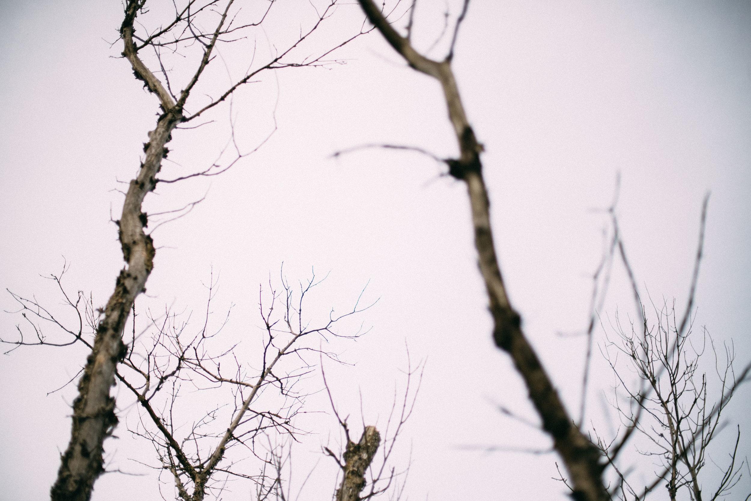 the_woods-2.jpg