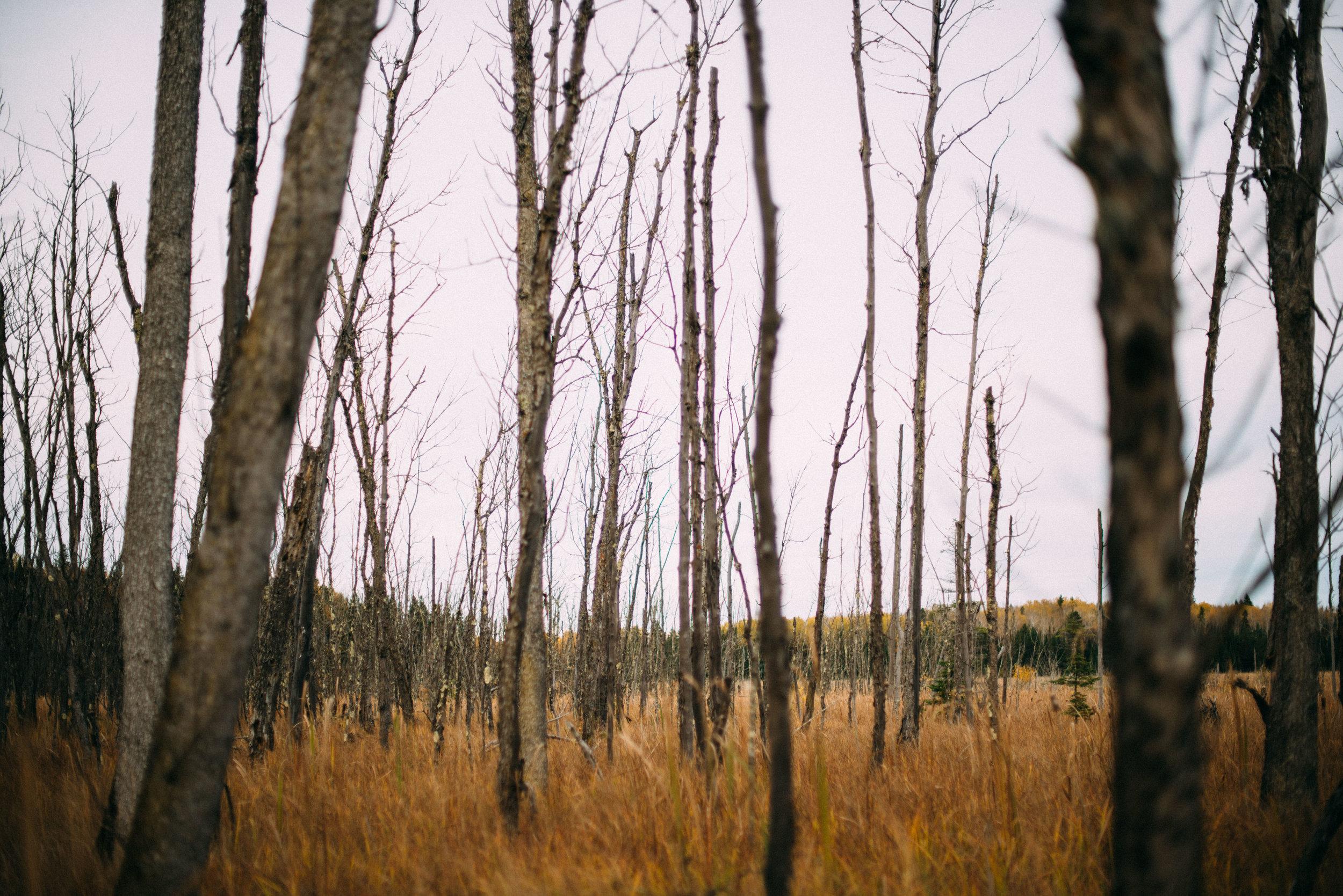 the_woods-3.jpg