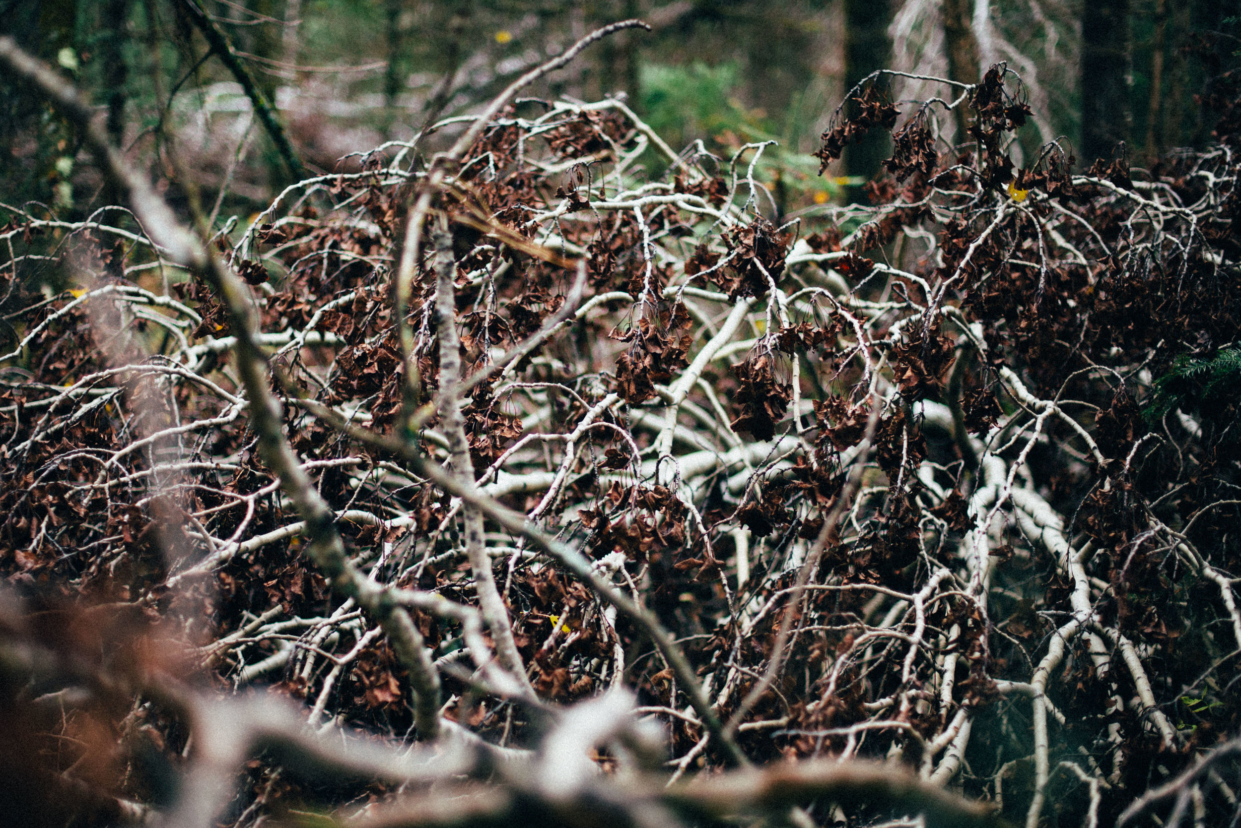 the_woods-6.jpg