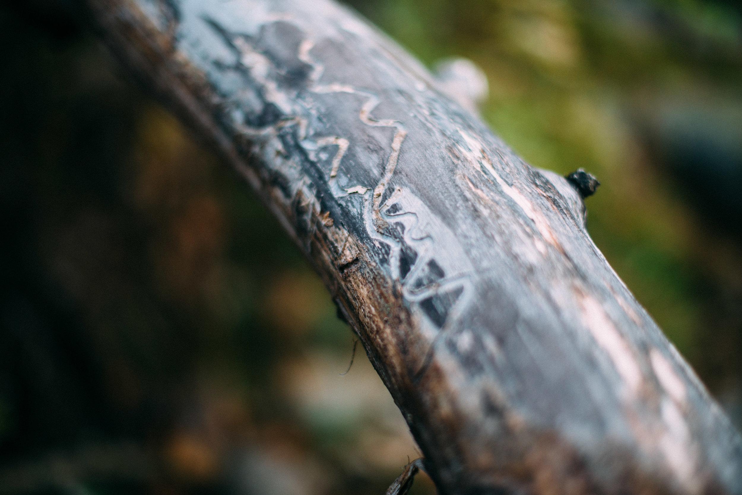 the_woods-11.jpg