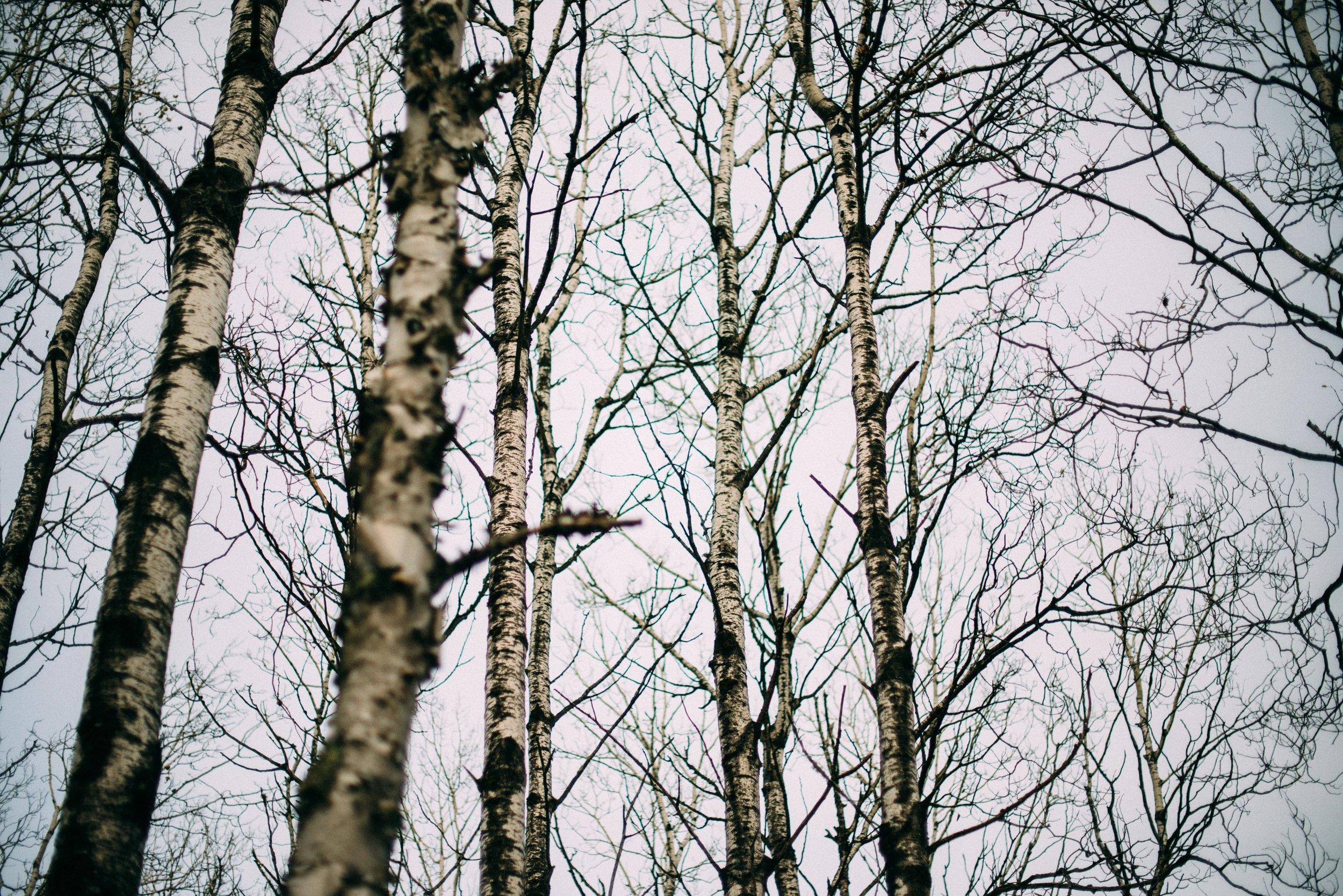 the_woods-13.jpg