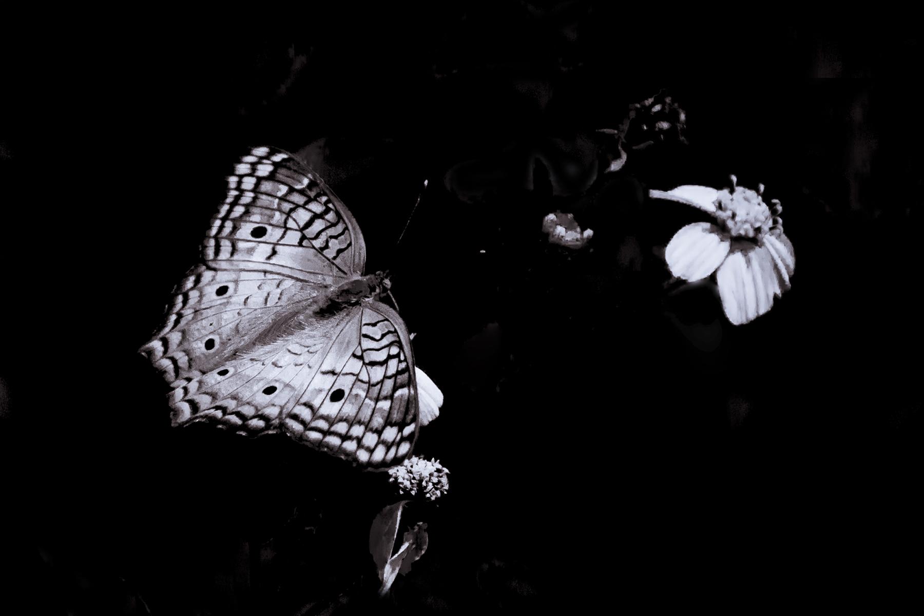 Robert Lo-Key Butterfly 01.jpg