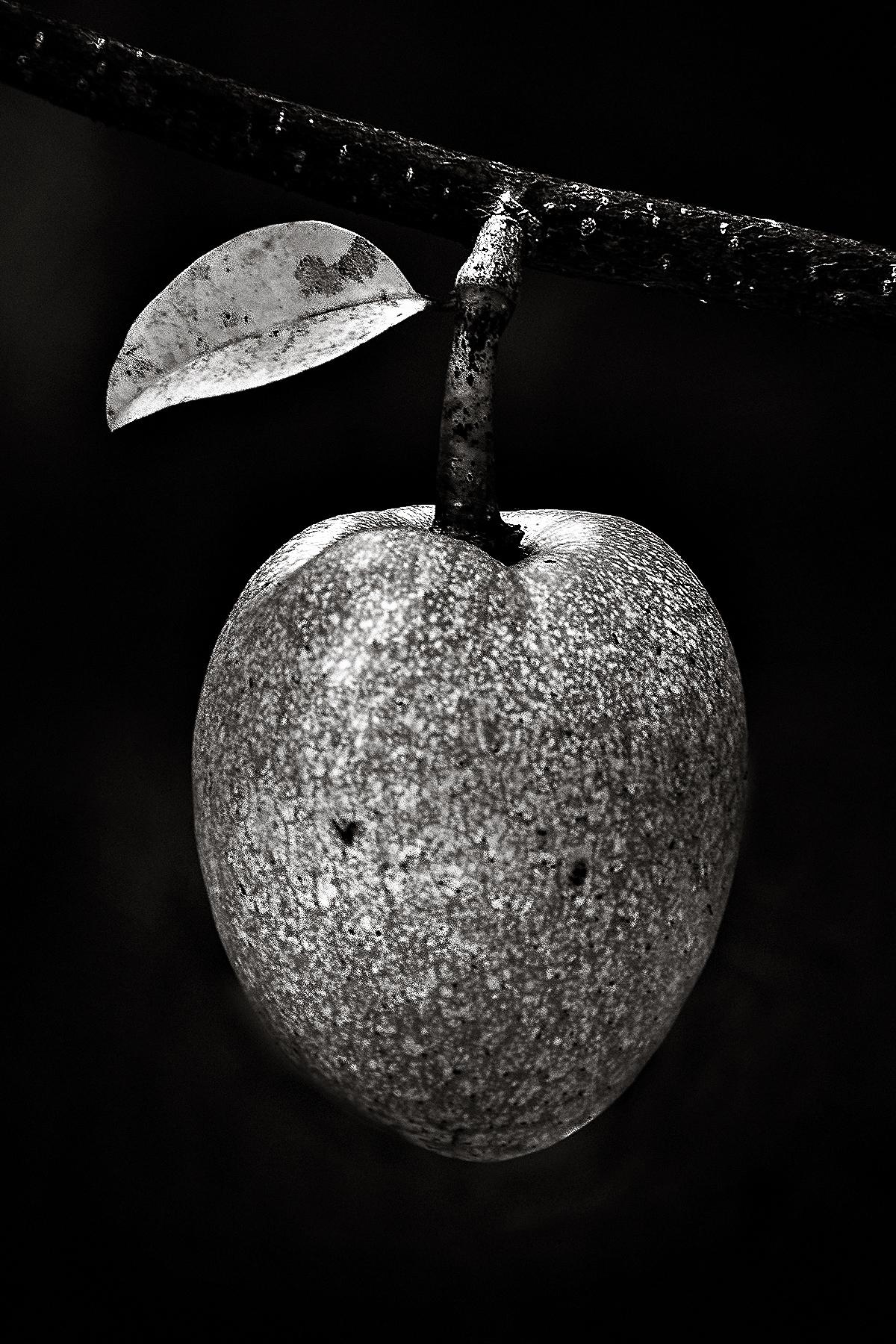 Robert Pond Apple 01a.jpg