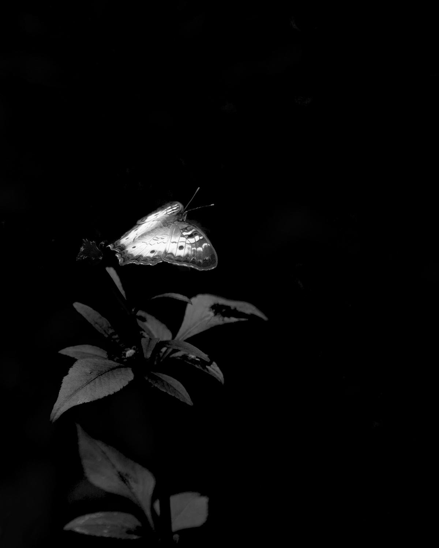 Sue Butterfly.jpg