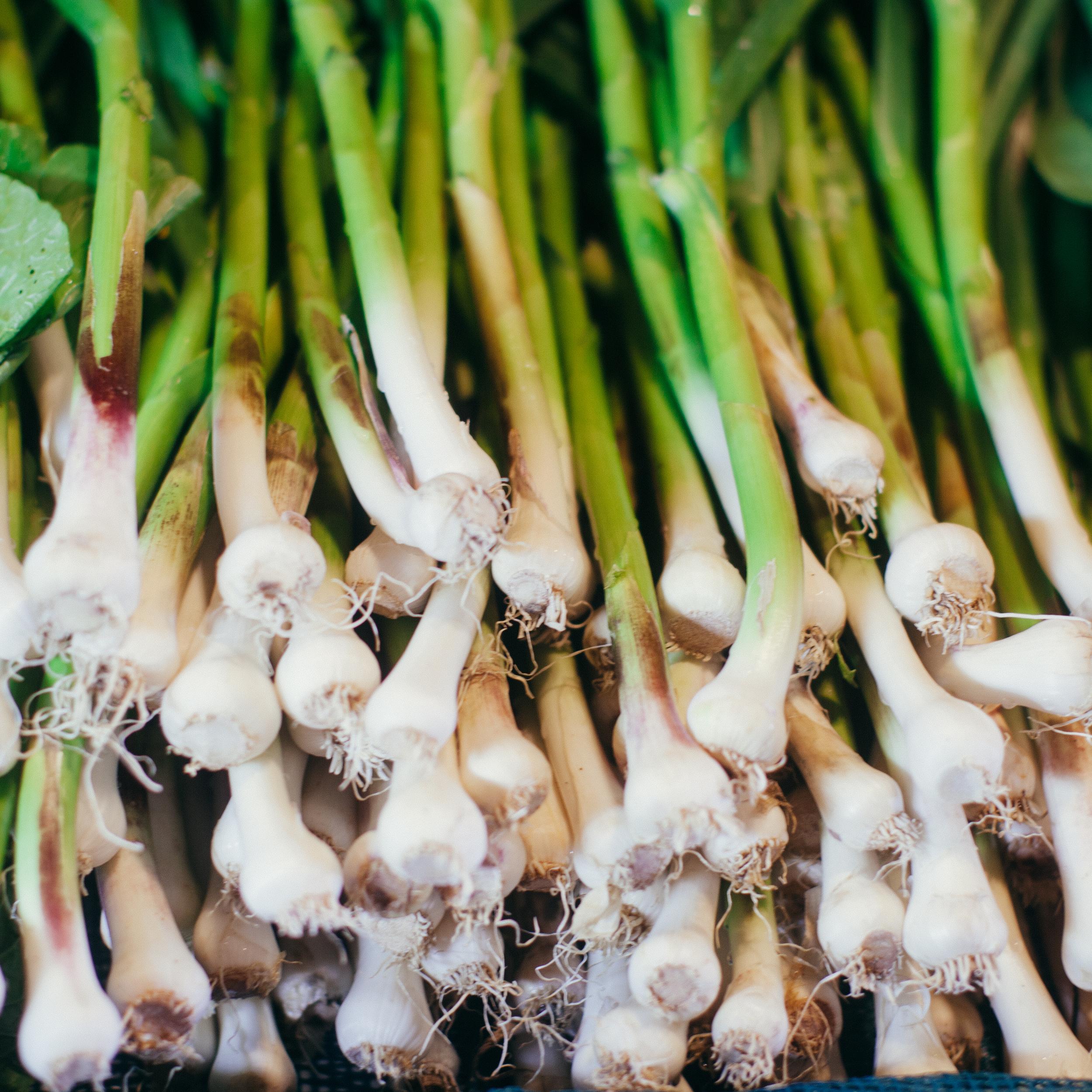 Green garlic from Beth's farm in Maine.