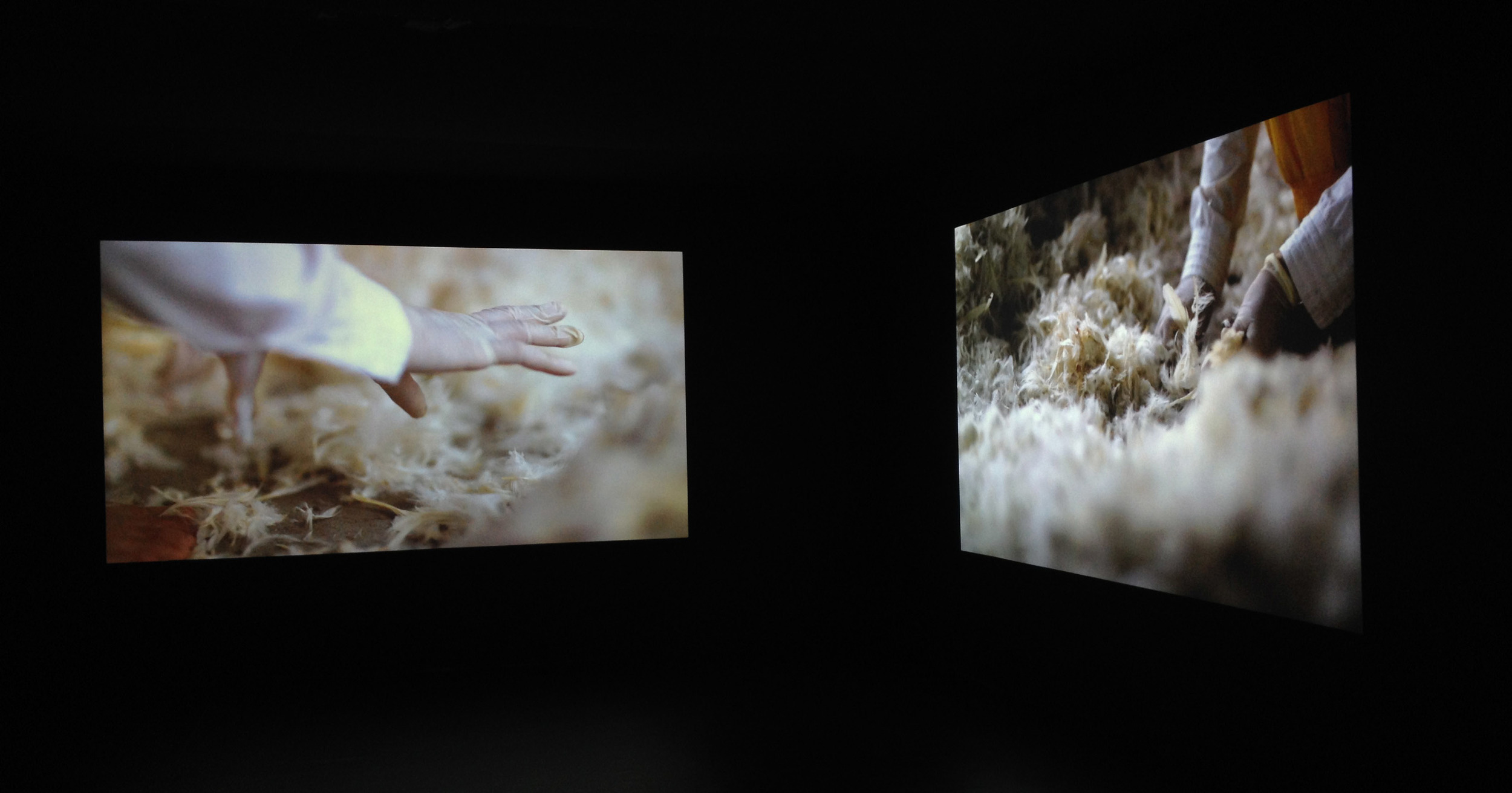 Installation view in 'Foreign Bodies' at the Wellcome Collection, London, 2013