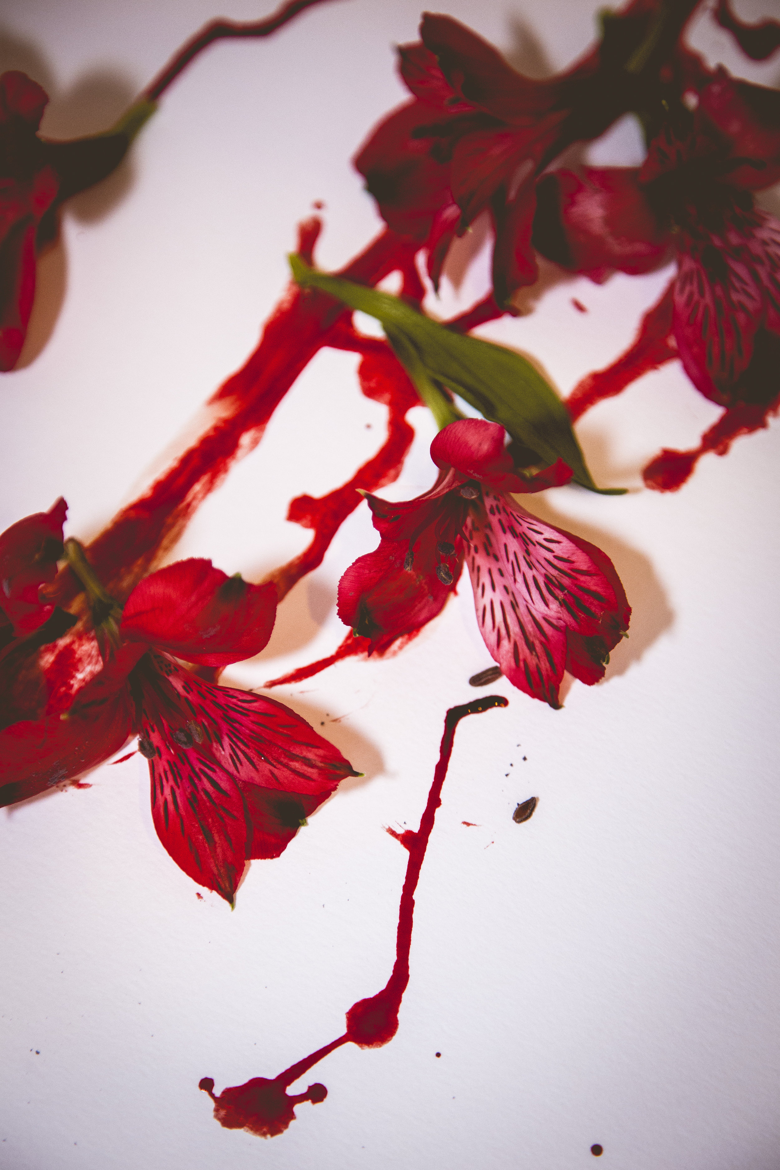flowering19.JPG