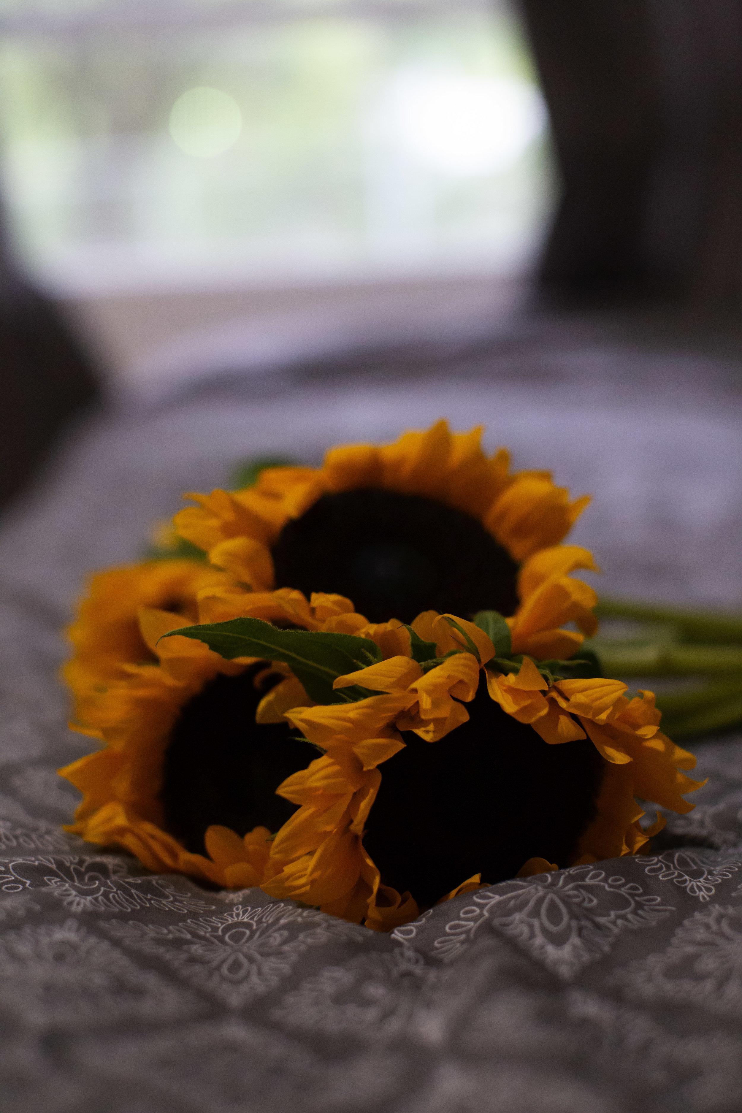 sunflowerday4.JPG