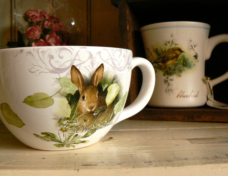 bunnycup