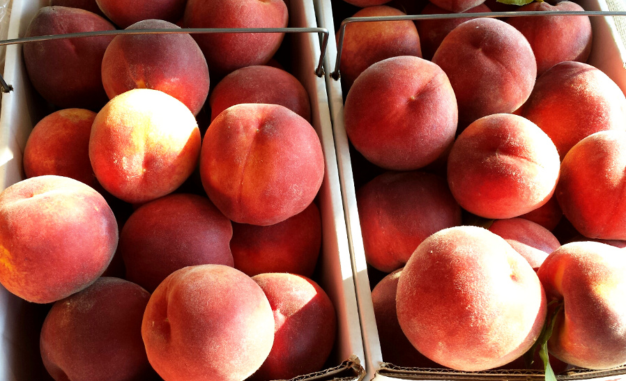 Peaches are beautiful this year - large, sweet, and juicy!