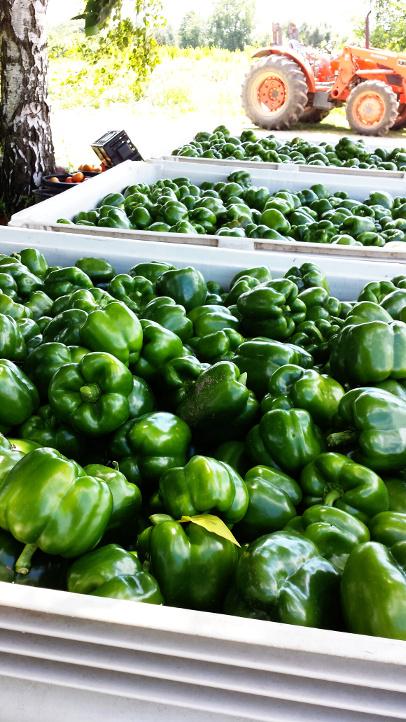 peppers3.jpg
