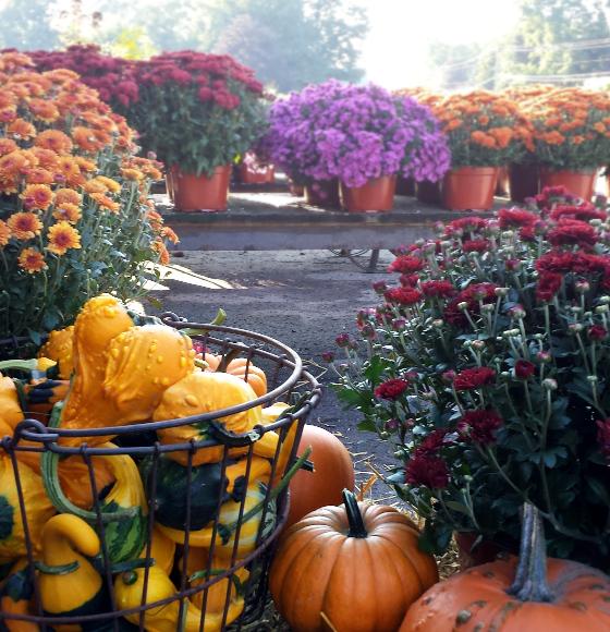 pumpkinmum.jpg