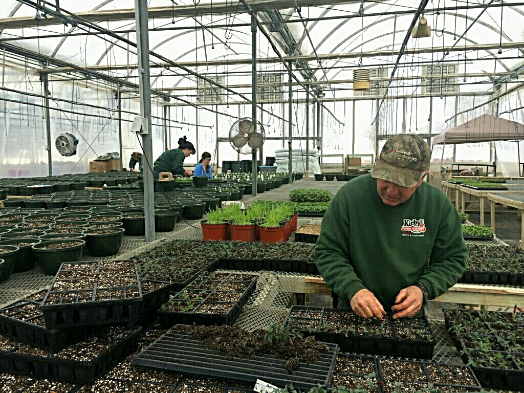 Tim Kirby transplants tomato seedlings while Kaisa and Stephanie plant hanging baskets in the background. Bay 2 is filling up!