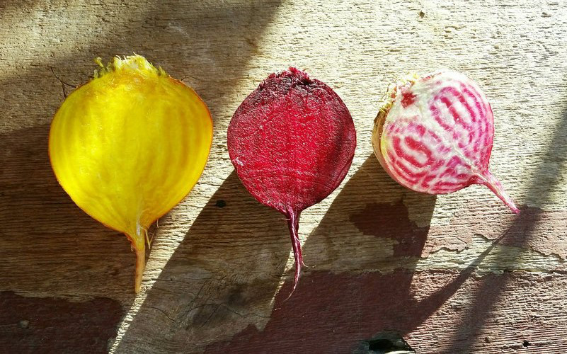 We have three different kinds of beets: Golden, which had a very mild, sweet flavor; Candy Cane, with beautiful red and white stripes; and regular Red Beets. Pickup a peck or half bushel to put up some beets today!
